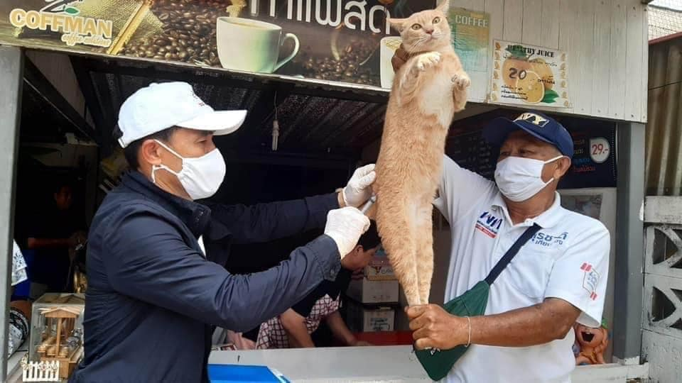 Cute expression of vaccinated cats in Thailand